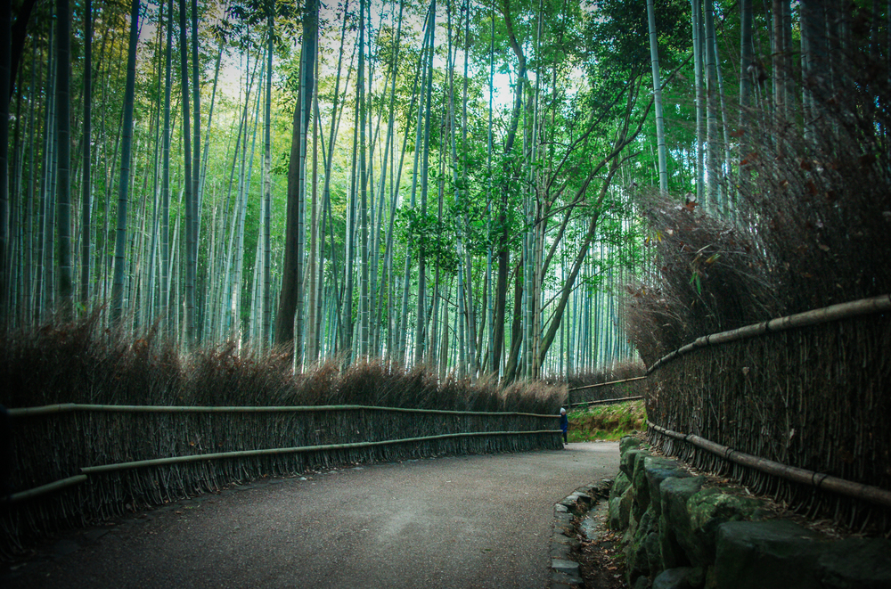 Path thru the Bamboo Grove