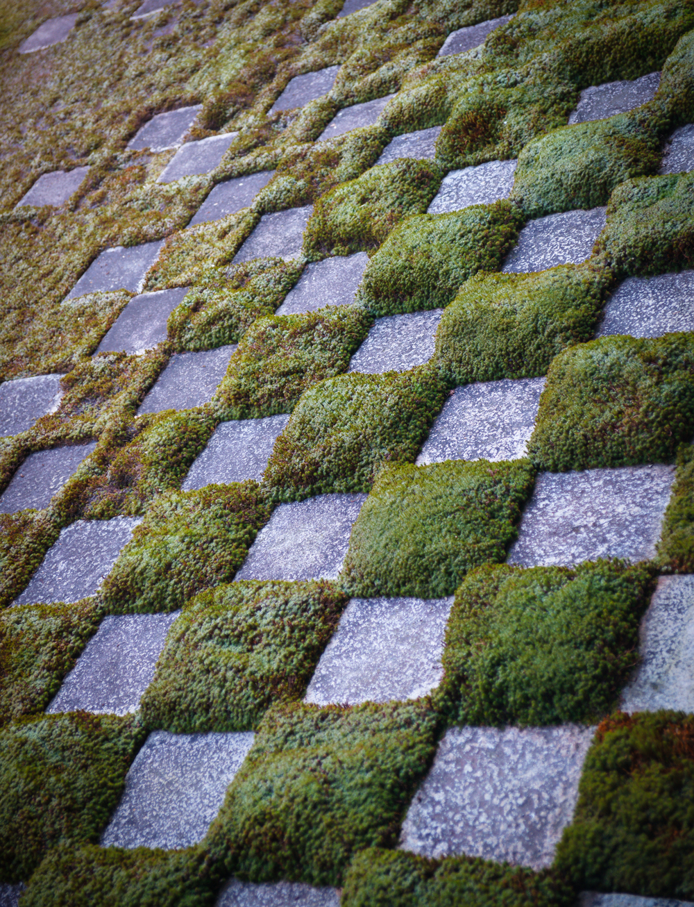 Checkerboard detail at the Rock Garden