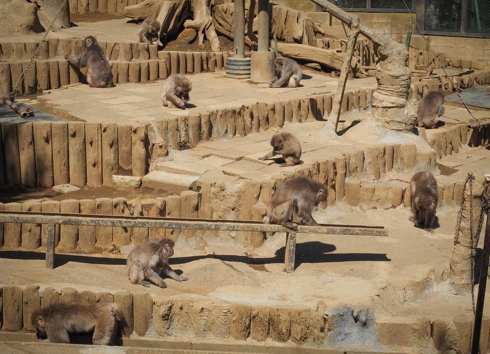 More Monkeys!