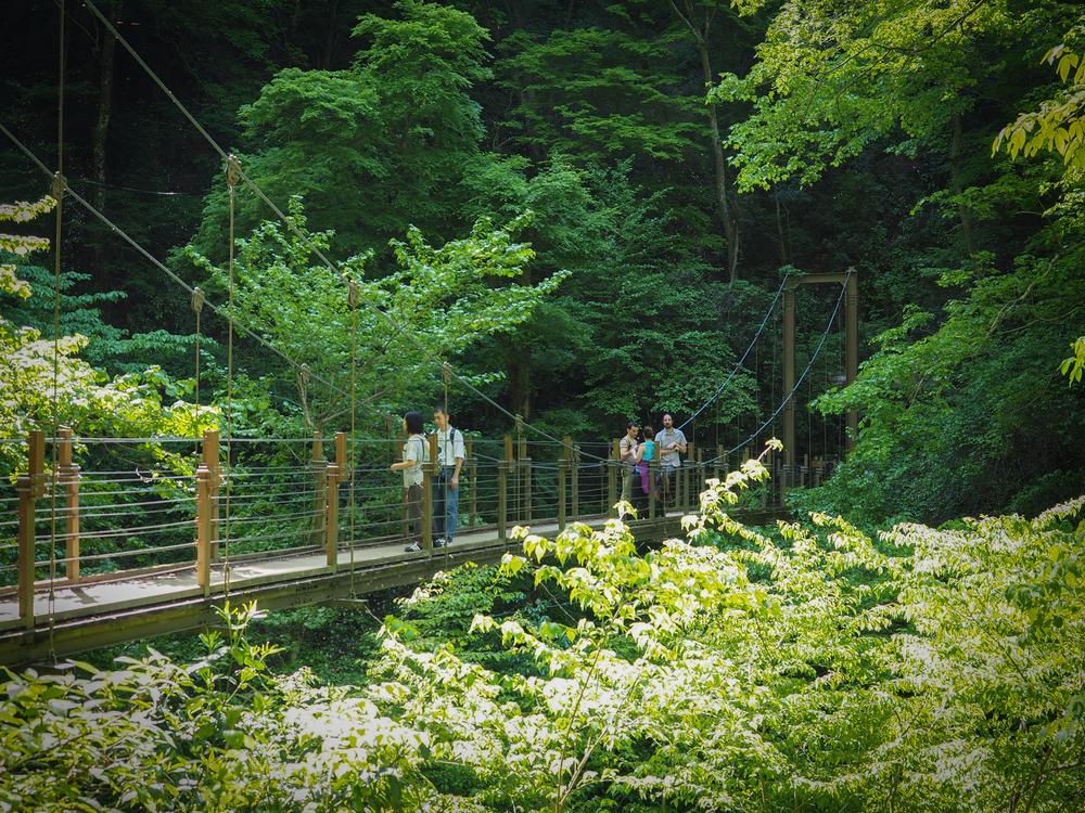Suspension Bridge on trail #4