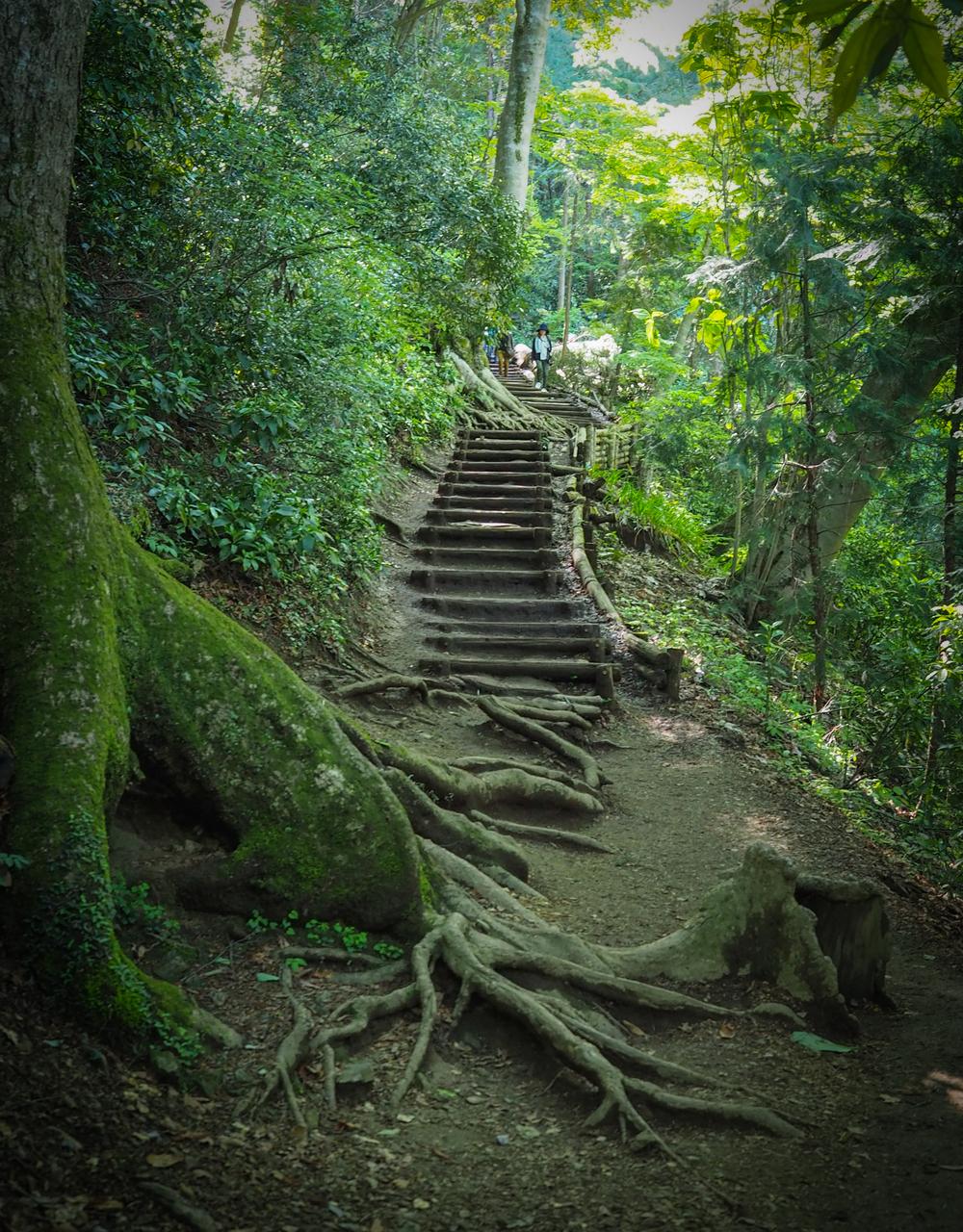 Steps along trail #4