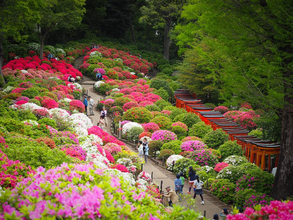 Overview of the Azalea Garden