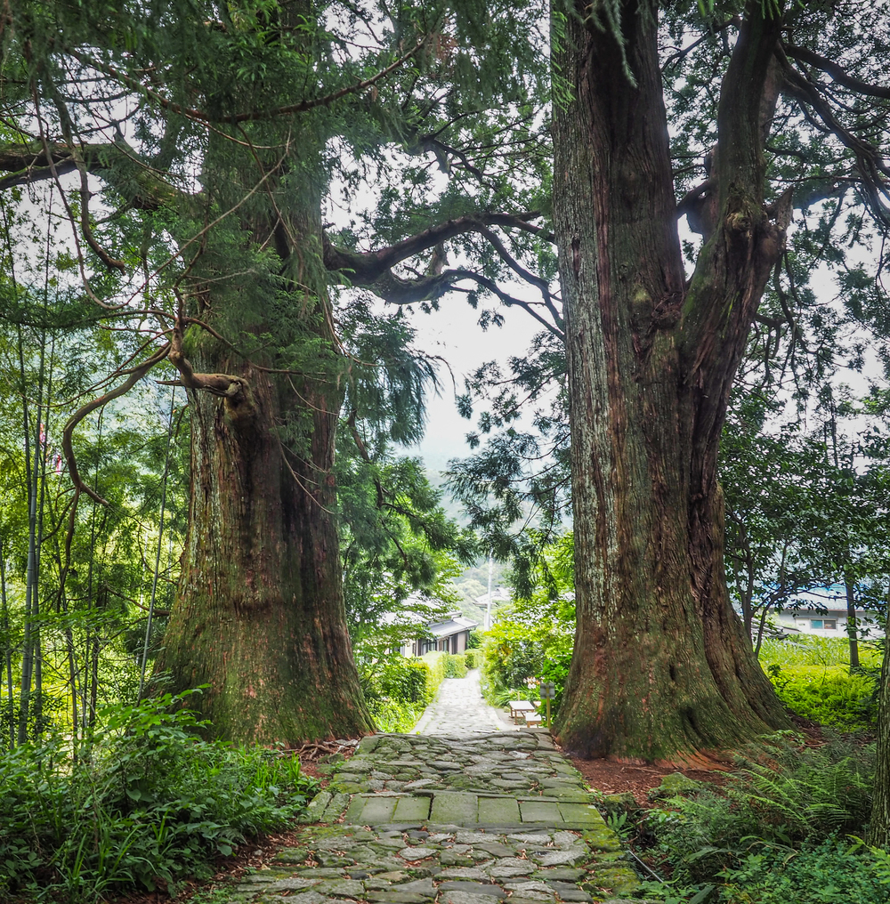 pair of 800 year old trees at the entrance to the Daimon-zaka slope
