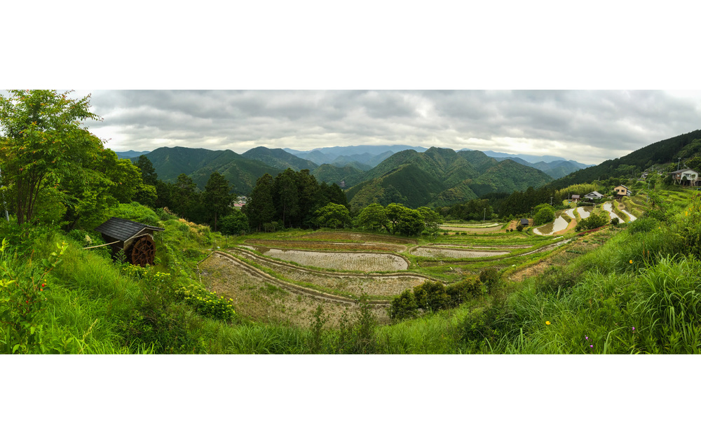 Valley of rice fields
