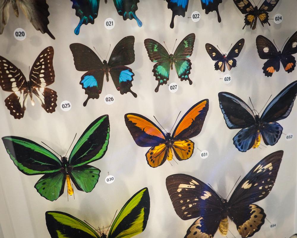 more butterflies....