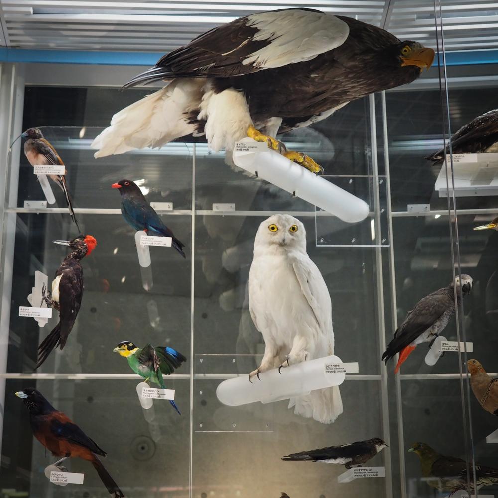 Hedwig??