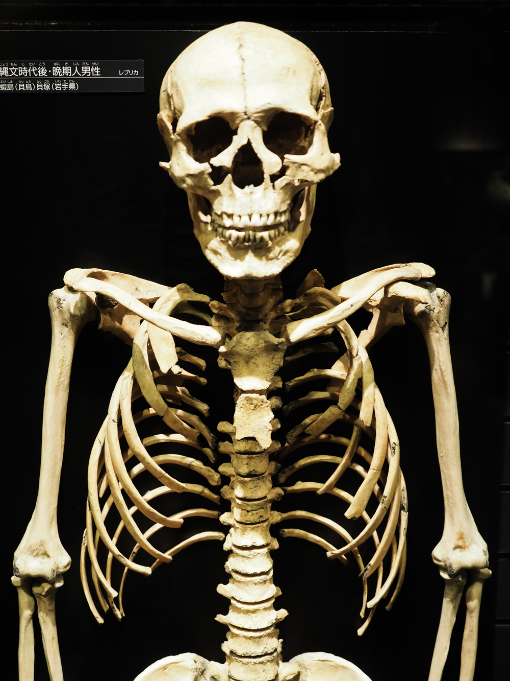 Ancient Human skeleton