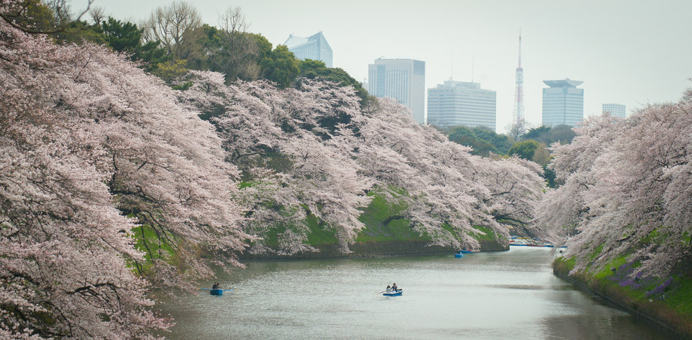 Imperial Palace Moat lined with Cherry Blossom trees