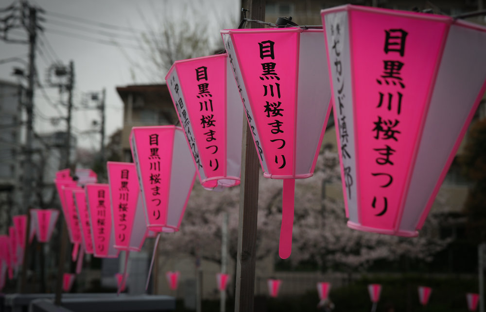 Pink and White lanterns line the River