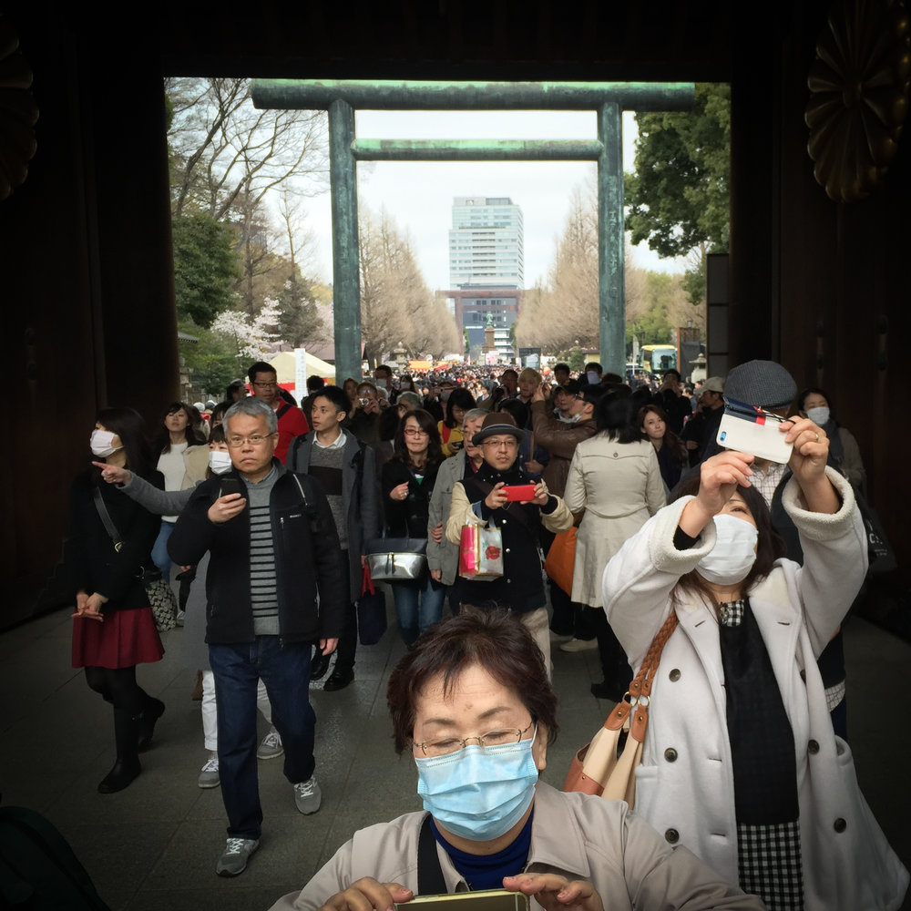Crowds gather for Hanami at Yasukuni Shrine
