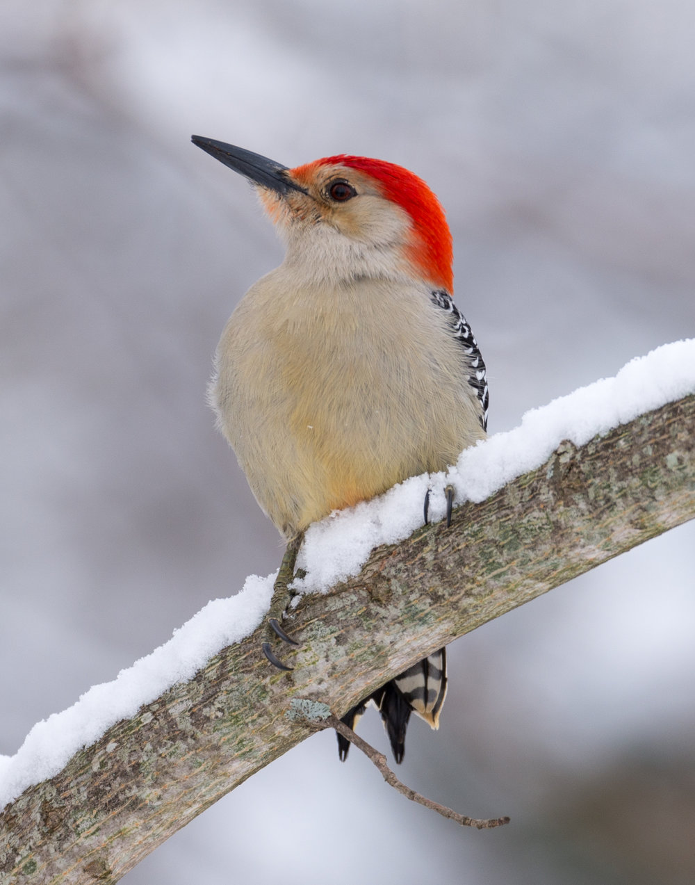 How To Photograph Backyard Birds In The Snow!