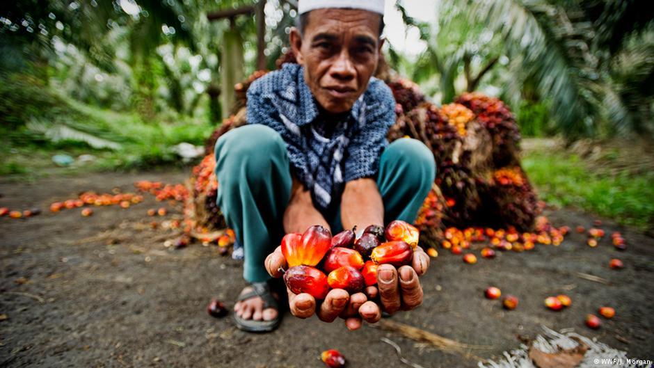 Bild: © WWF / J. Morgan
