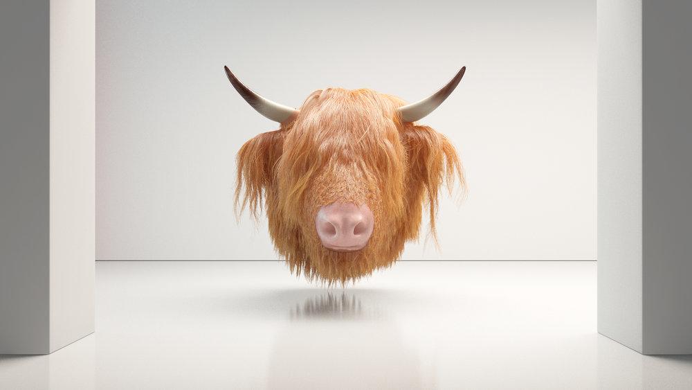 cow_head0156.jpg
