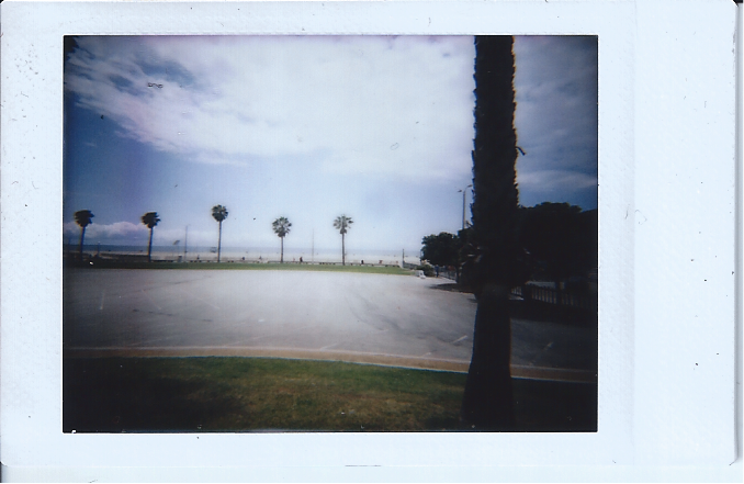 Palms 3.png