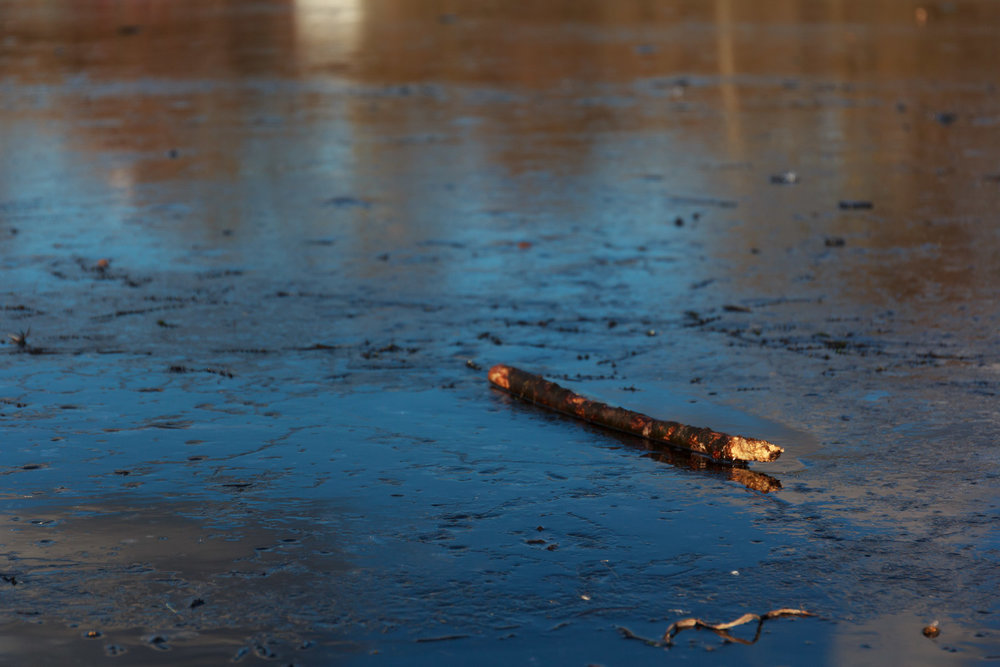 A log thrown onto the surface, slightly melting the surface. Also noticed some twigs frozen into the ice!