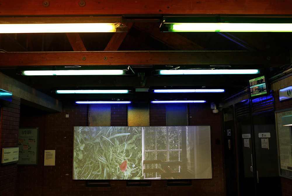 'Wild Longbridge 2016' for Longbridge Light Festival 2016, Cathy Wade transformed the ticket office of Longbridge train station through video installations and coloured gels.