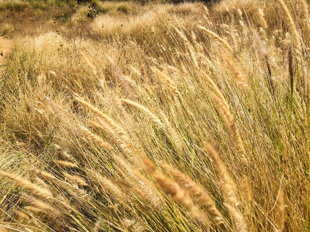 Italiy Grass.JPG
