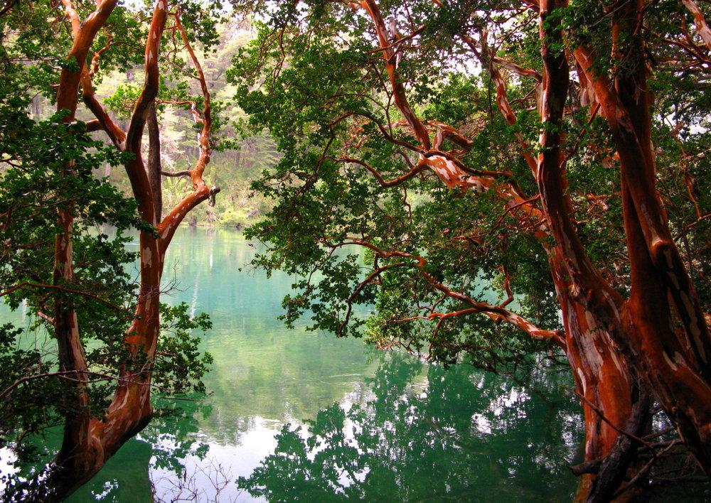 Arrayanes River