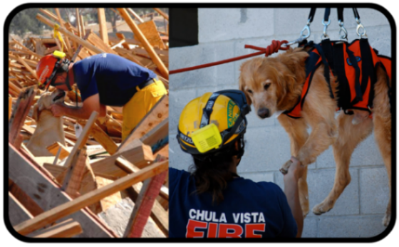 Chula Vista Fire Search dog