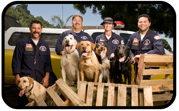Fire Dept and search dogs