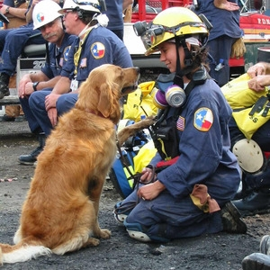 National Search Dog Foundation image