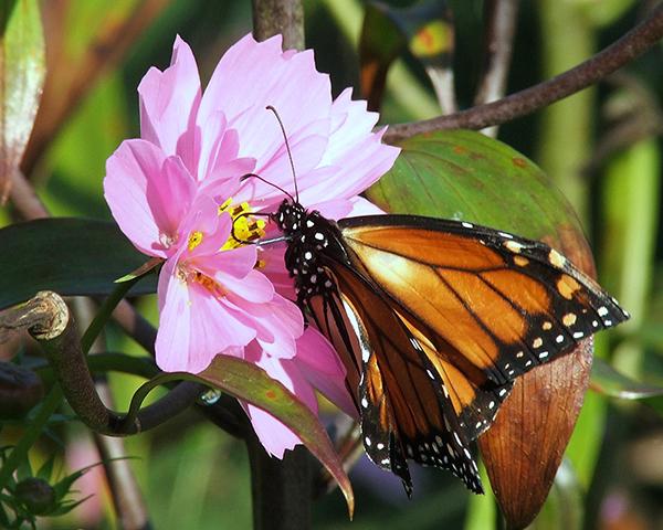 oh-my-butterfly-1388615.jpg