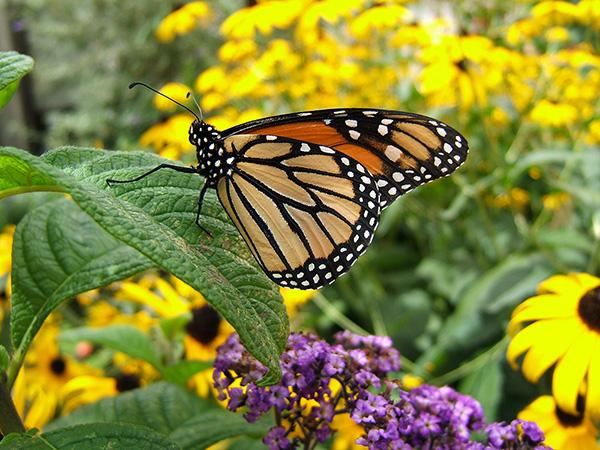 butterfly-garden-1-1361647.jpg