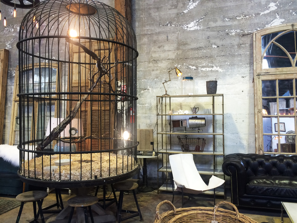 bird cages done right at big daddy san francisco