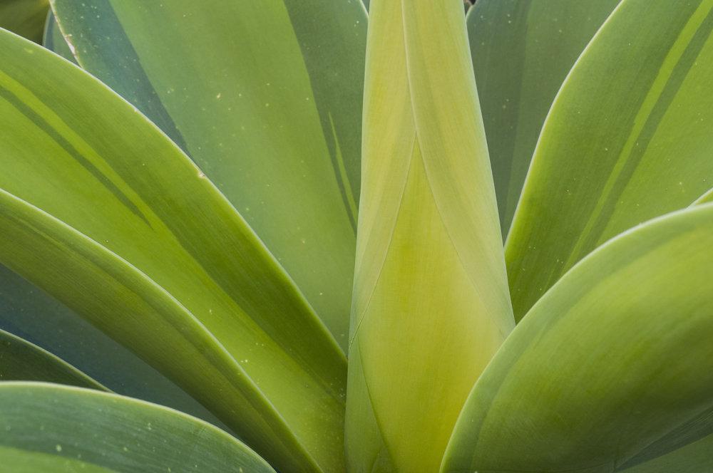 succulent photography
