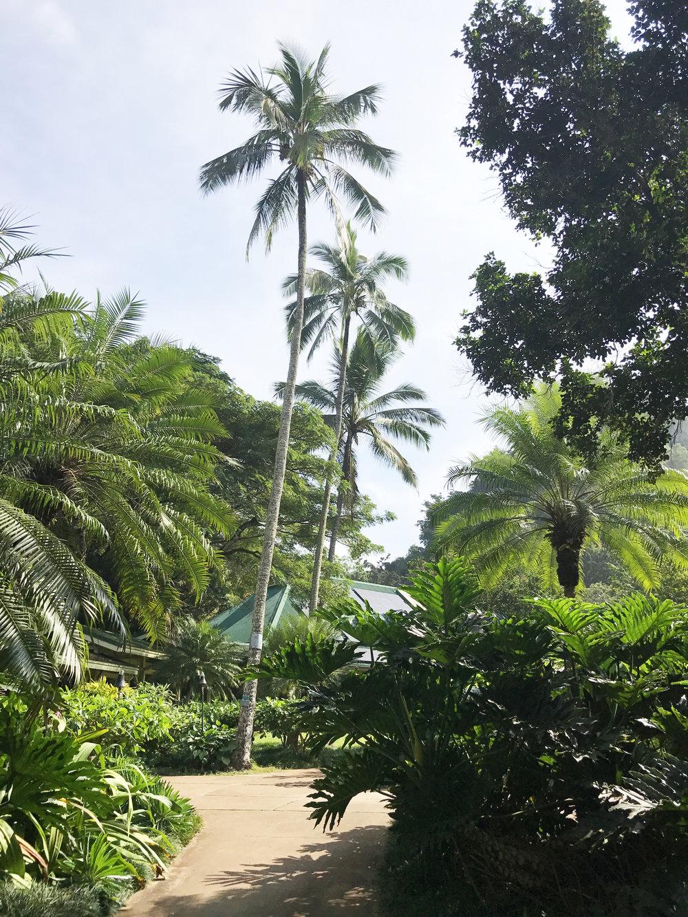 Waimea Bay botanical garden