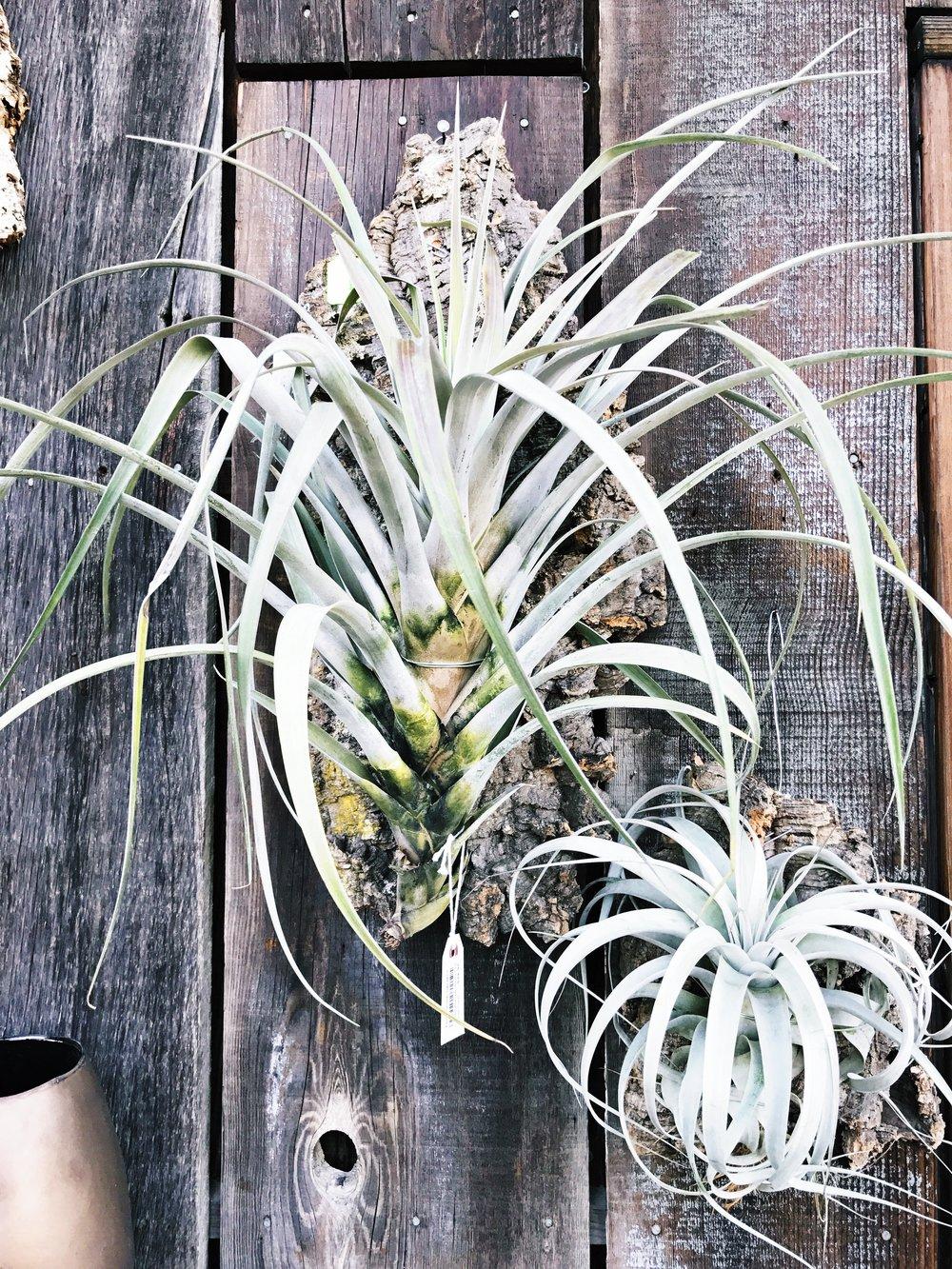 succulent inspiration at flora grubb gardens