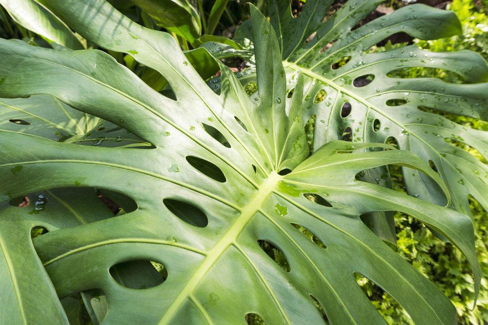 botanic gardens tropical oasis singapore