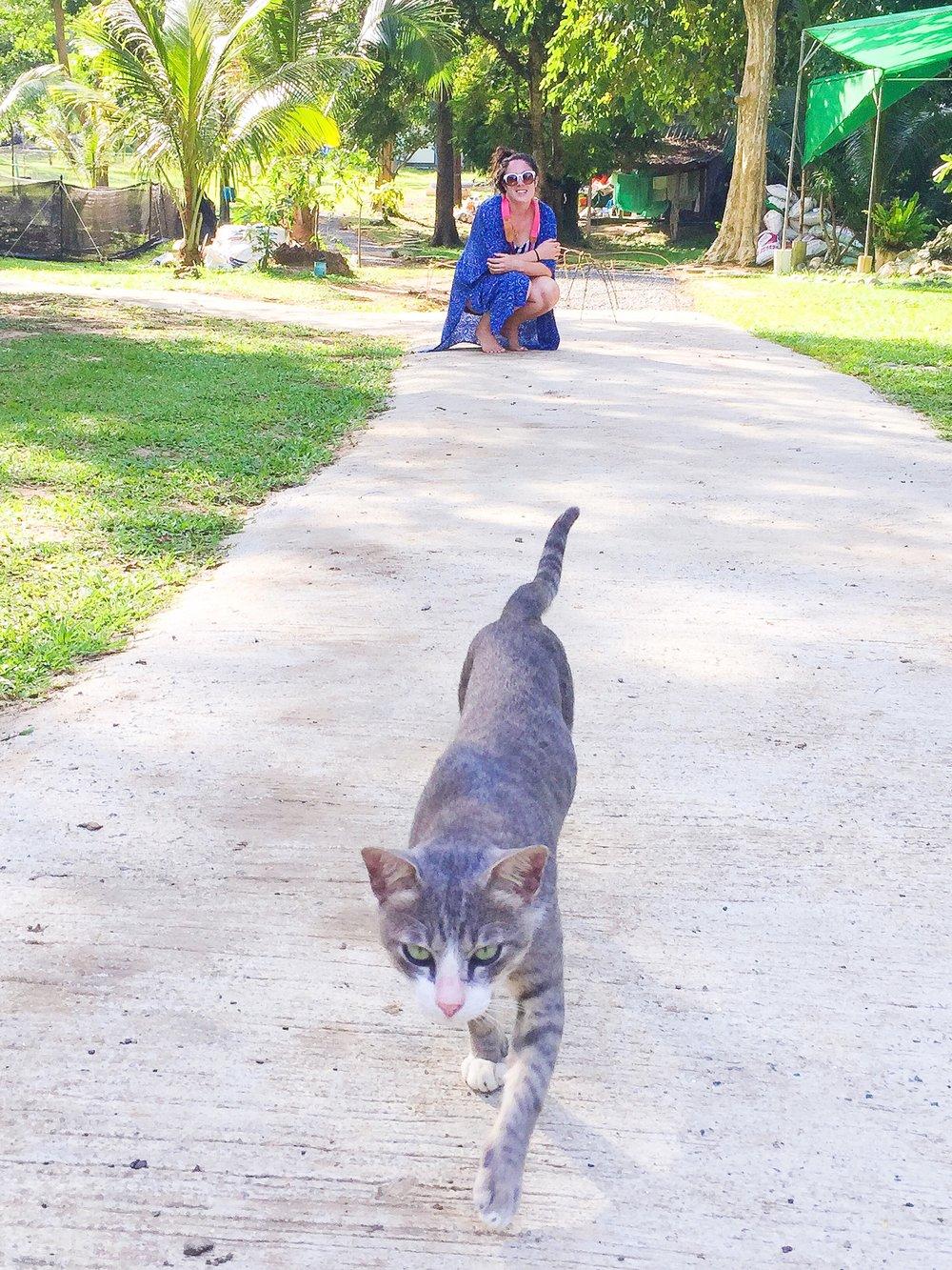 island cat thailand best island