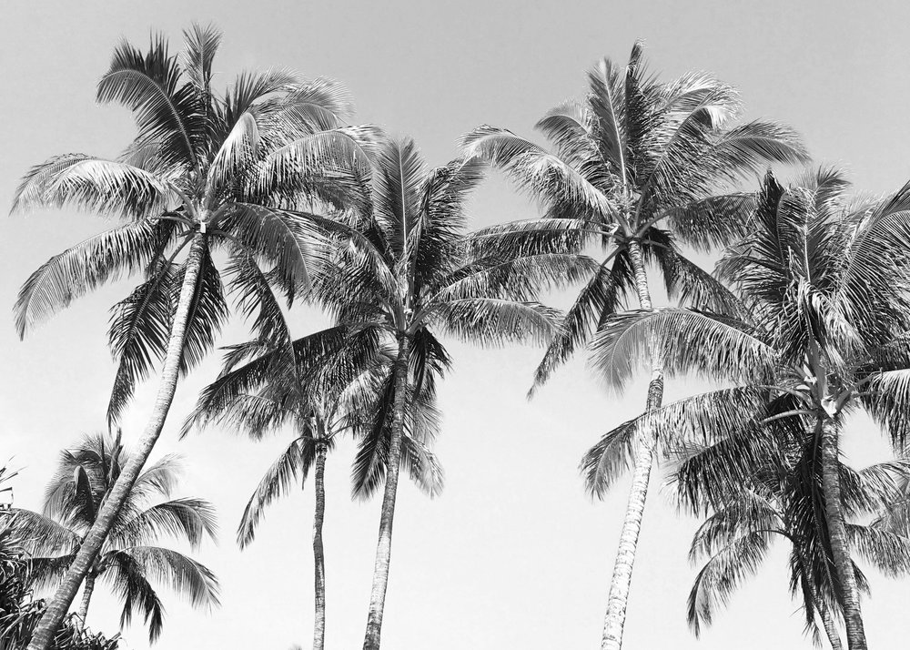 hawaii palm tree dreams