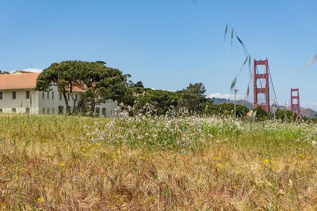 Sometimes for work I get to explore really special places. City, meet country. 💙 #sanfrancisco #exploresf #presidio #takeawalk #gglocalgems #wildflowers