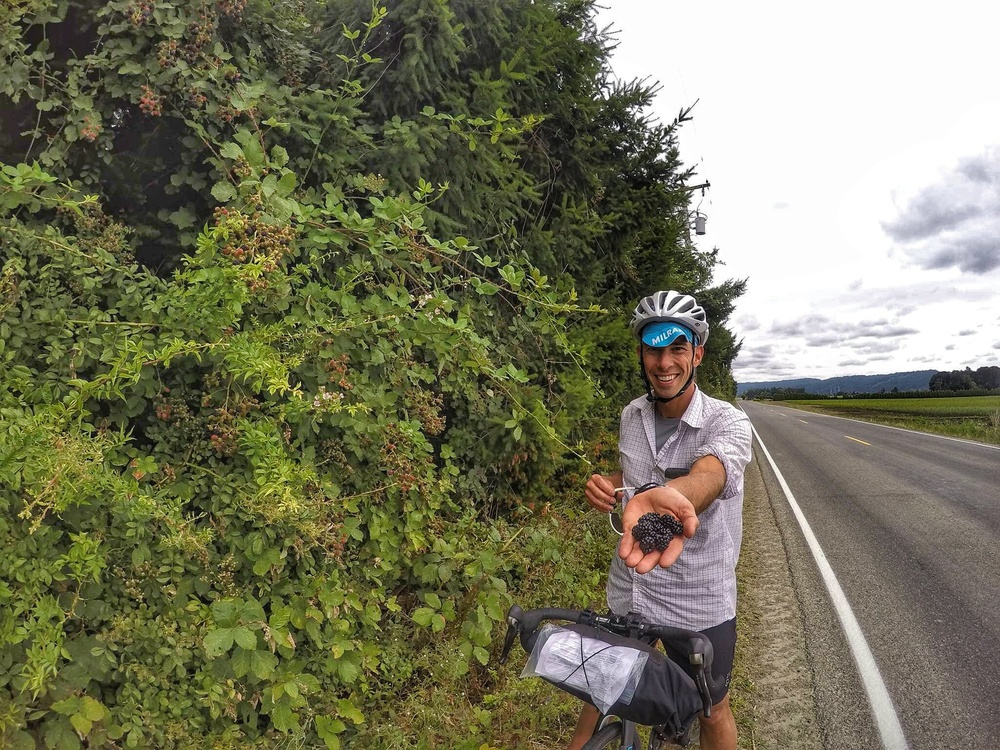 Stoked to find some fresh blackberries- free fuel for our ride!!