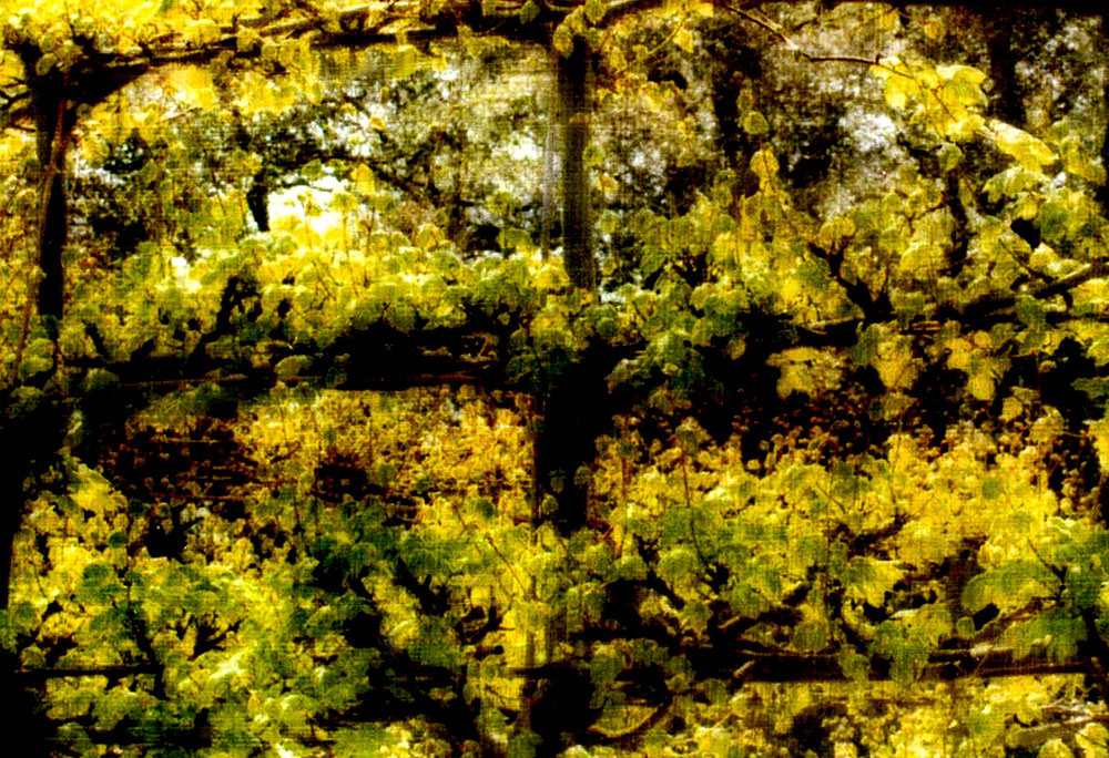 """Leaves,"" alternative process photo, 28 X 41 in., © 2017 Bill Travis"