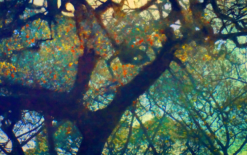 """Magical tree,"" alternative process photo, 34 X 54 in., © 2017 Bill Travis"
