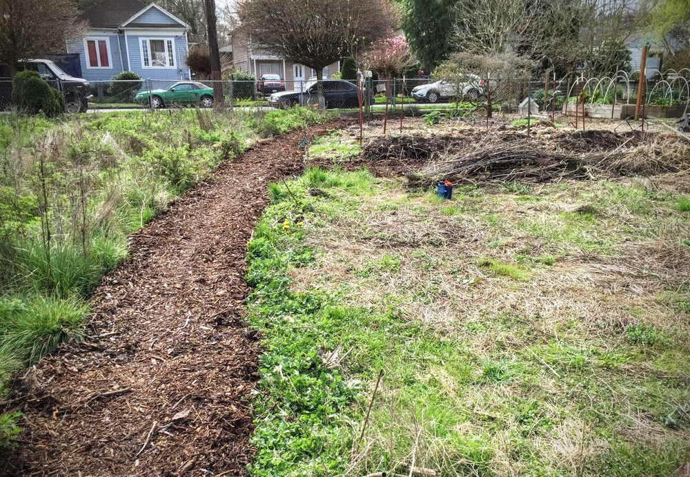 The hub and I laid down cardboard and coffee bags to prevent weed growth, then covered it all with wood chips to re-define this path: wildflowers to the left, garden beds to the right.