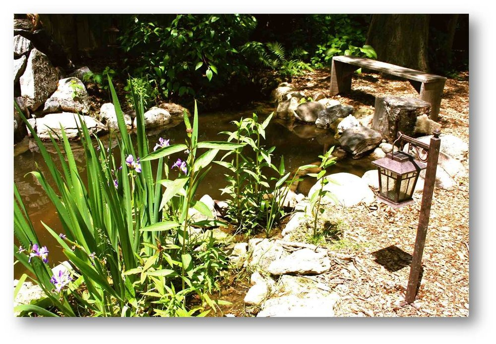 Later when the backyard pond matured...the native plants at the edges brought in a much more natural appearance and of course many more insects, amphibians, reptiles, birds and mammals.