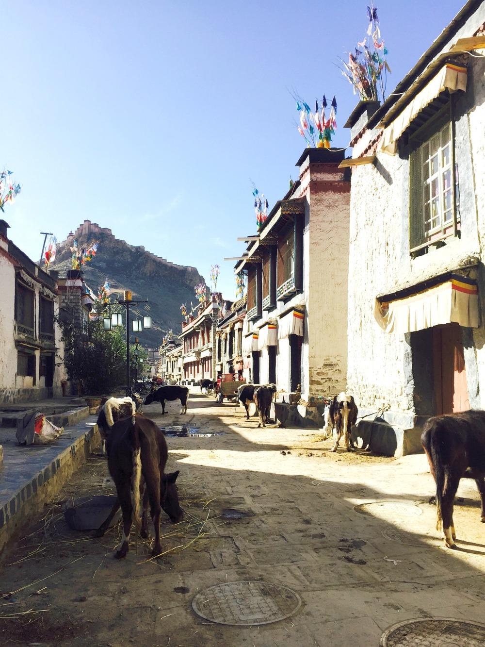 September 2015, Tsering Lhamo, Road to Tibet Travel