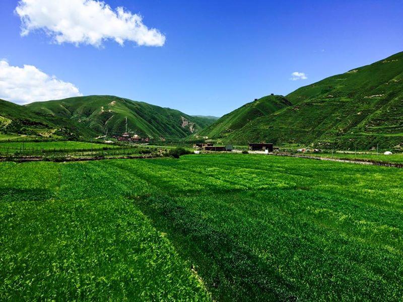 August 2015, Woeser Phel, Road to Tibet Travel