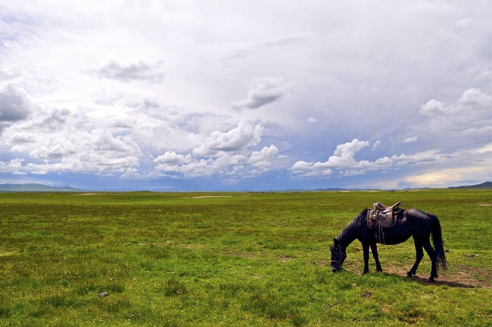 Amdo Grasslands