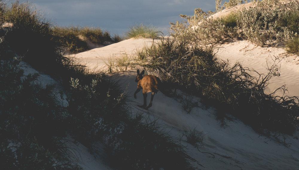 Cape Range National Park W.A, April 2018