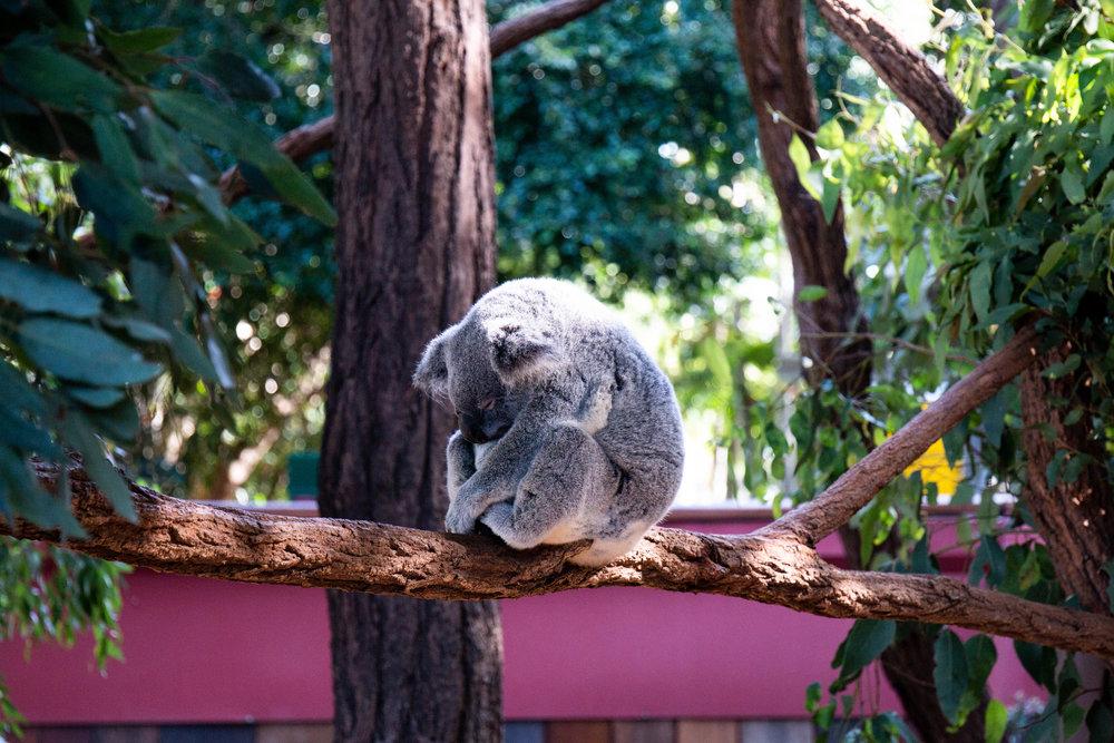 Australia Zoo, May 2018