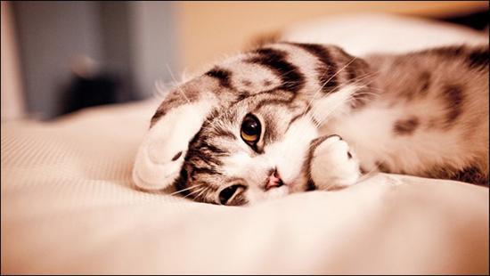 Cute kitties in the morning