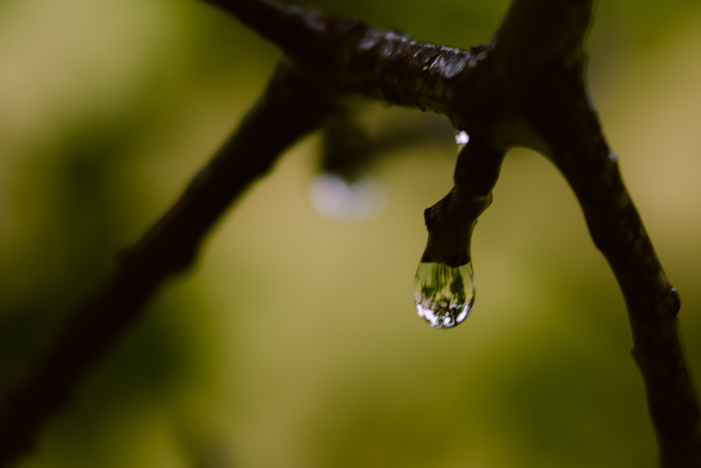RainDayFS-3062-3.jpg