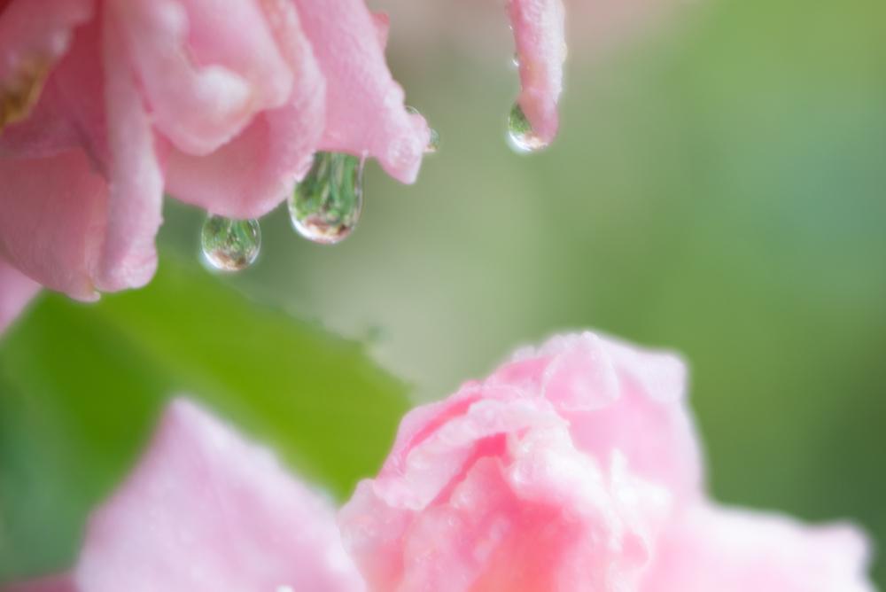RainDayFS-3146.jpg