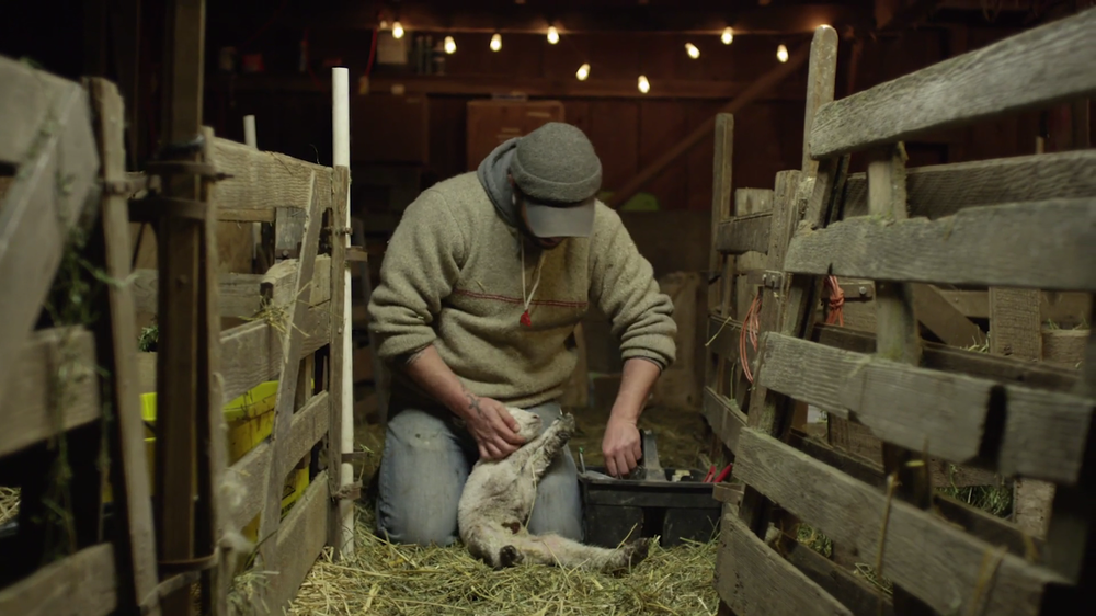 Joe taking care of a newborn lamb in the barn .