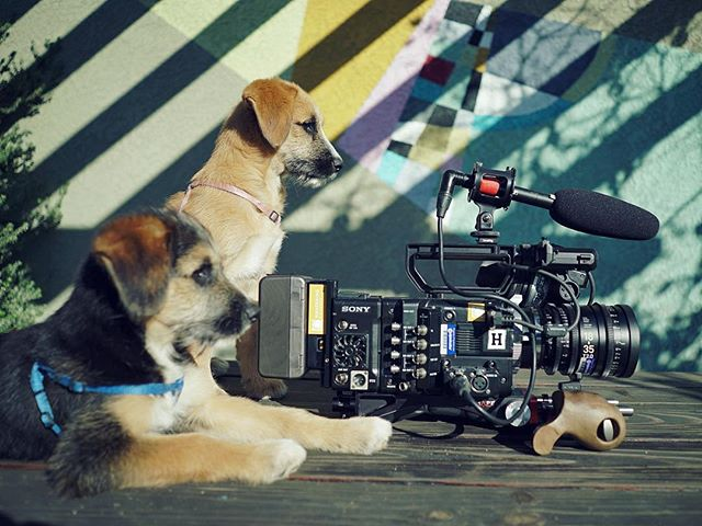 Filmmaking is so easy, a puppy could do it.  Here's a gratuitous photo we think should be very popular because it has puppies and a camera.  Who would you rather hang out with all day?  #filmmakingiseasy